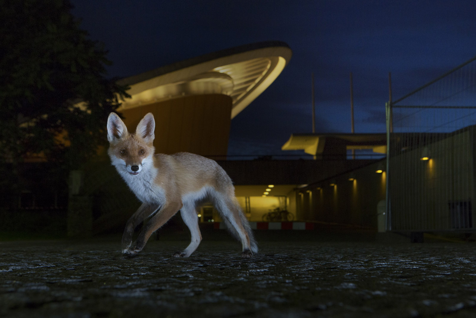 Foto: Felix Heintzenberg